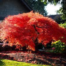 Products Kiefer Nursery Trees Shrubs Perennials