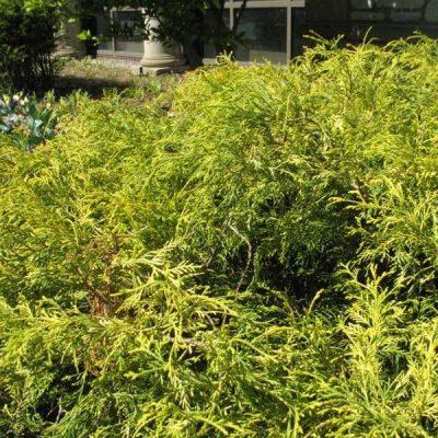 Shrubs Kiefer Nursery Trees Shrubs Perennials