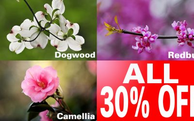 Anticipating Springtime March Sale