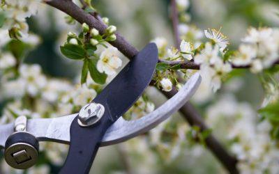 Pro-tips: How should I prune?