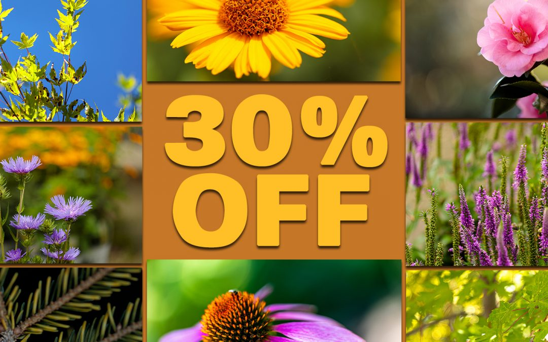 IT'S NOT TOO COLD TO PLANT NOVEMBER & DECEMBE SALE